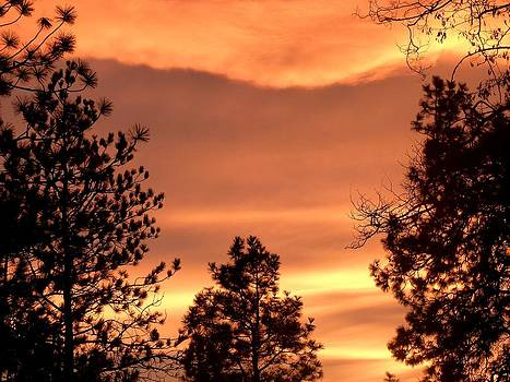 Glorious Silhouettes 2 by Will Borden