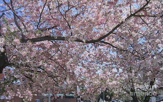 Glorious Spring by Marlene Robbins
