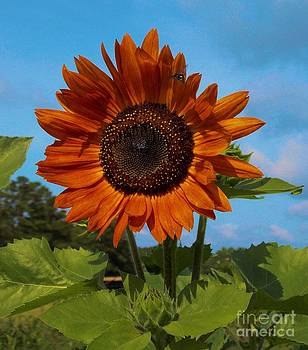 Glorious Sunflower by Annette Allman