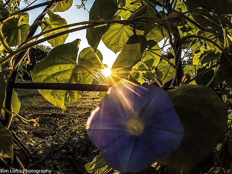 Glorious Sunrise  by Kim Loftis
