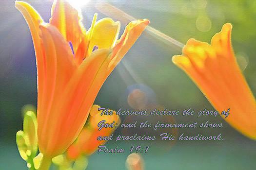 Glory by Barbara Dean