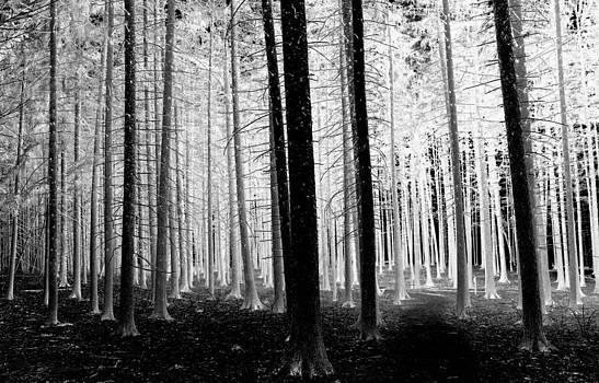 Rosanne Jordan - Glow in the Forest