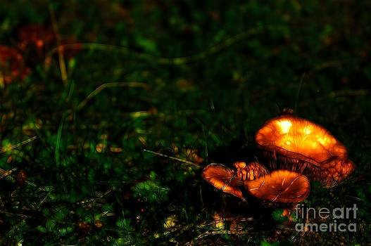Glow Mushrooms by Matthew Naiden