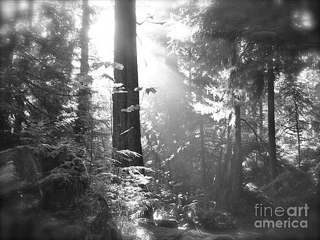 Glowing forest by Tina Hannaford
