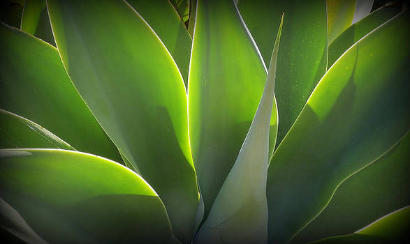 Karyn Robinson - Glowing Gorgeous Green