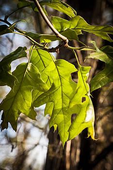 James Woody - Glowing Leaves