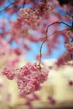 Jenny Rainbow - Glowing Softness. Pink Spring in Amsterdam