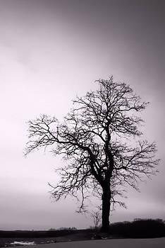 Gnarly Tree Portrait by Wayne King