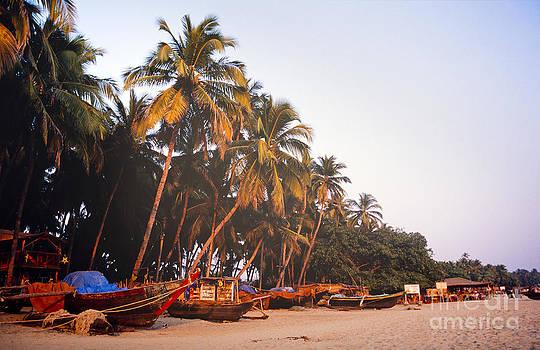 Tim Hester - Goa India