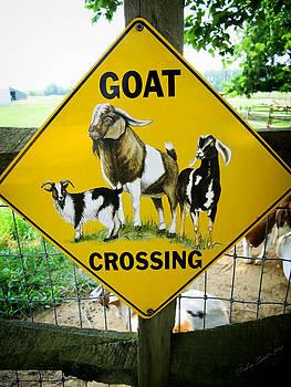 Goat Crossing by Dulce Levitz