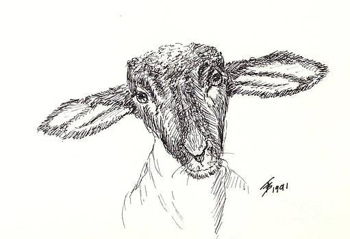 Art By - Ti   Tolpo Bader - Goat Gaze