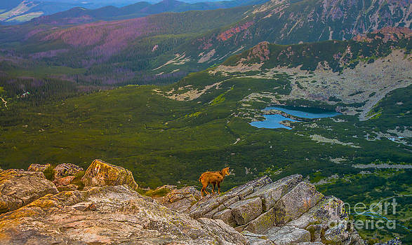 Goat in The Tatras by Lilianna Sokolowska