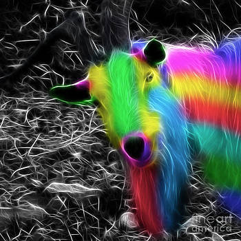 Goat of colour by Jo Collins