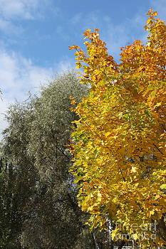 Gold autumn by Evgeny Pisarev