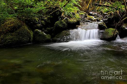 Gold Creek  by Tim Rice