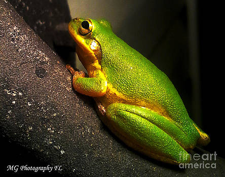 Gold Flake Frog by Marty Gayler