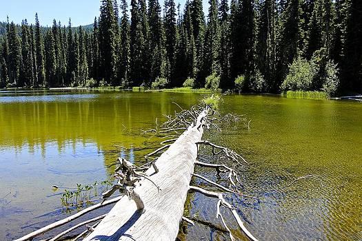 Gold Lake by Tim Rice