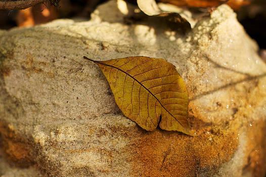 Gold Leaf by Jane Eleanor Nicholas