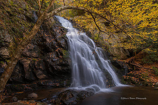 Gold Waterfall by Sheen Watkins