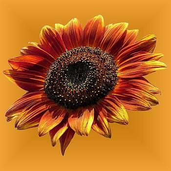 MTBobbins Photography - Golden Autumn Beauty