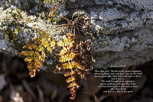 Mother Nature - Golden Autumn Fern