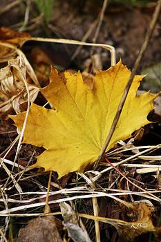Golden Autumn by Kathy J Snow