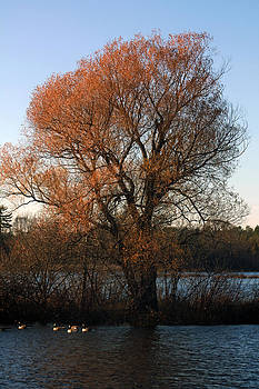 Golden Autumn by Rhonda Humphreys
