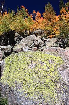 Golden Autumn with Boulder by Karen Lee Ensley