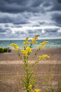 Golden Beach by Jim McCain