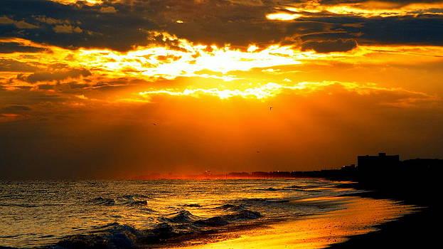 Golden Beach Sunset  by Cindy Croal