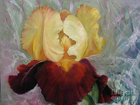 Golden Bearded Iris by Barbara Haviland