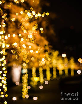 Sonja Quintero - Golden Bokeh Trees