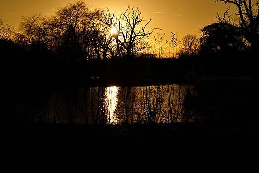 Golden Brown by Dave Woodbridge