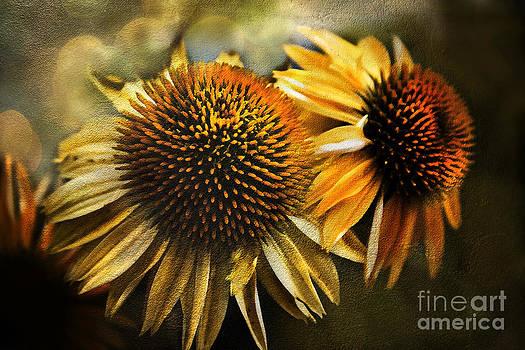 Floral- Golden Daisies by Feryal Faye Berber