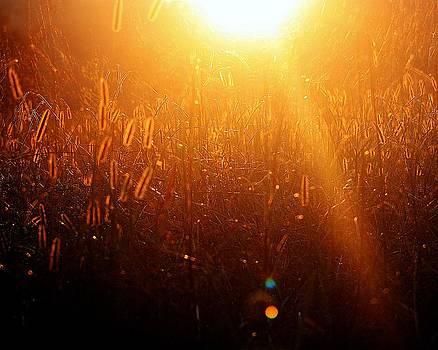 Golden Days by Michael Tipton