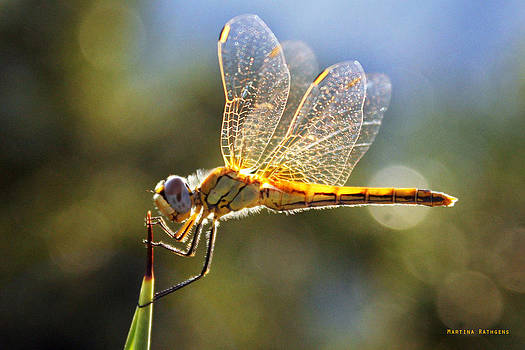 Golden Dragonfly by Martina  Rathgens