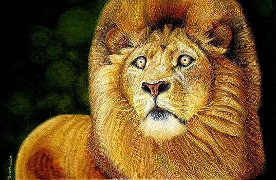 Golden Eyed Lion on the Hunt by Karen Sharp