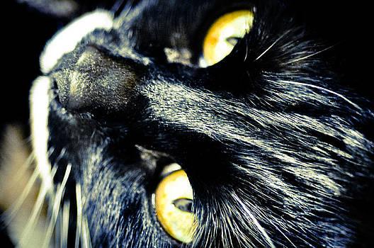 Ronda Broatch - Golden Eyes