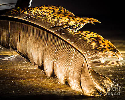 Golden Feather by Sue Lyon-Myrick
