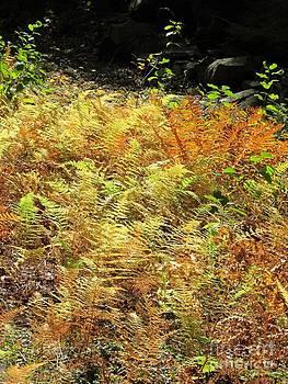 Golden Ferns by Linda Marcille