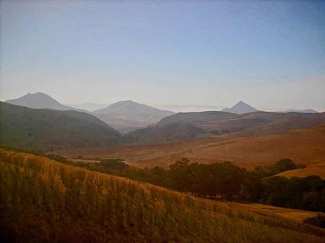 Carolyn Stagger Cokley - golden fields