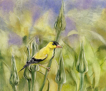 Alfred Ng - Golden Finch