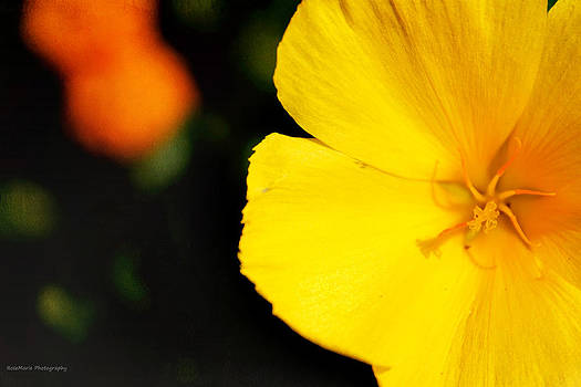 Golden Flora by Vanessa Parent