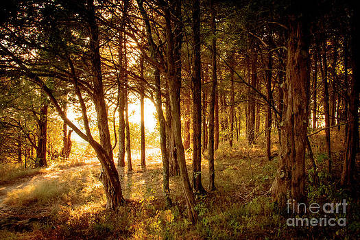 Golden Forest by Mary Licanin