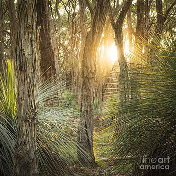 Tim Hester - Golden Forest