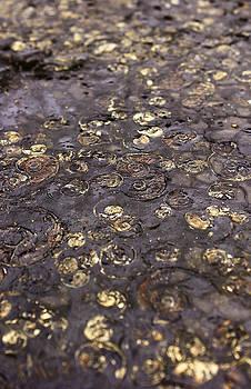 Golden Fossils by Tony Partington