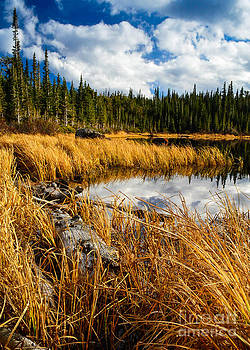 Golden Grass at Red Rocks Lake by Peter Castricone