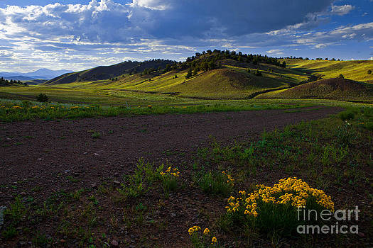Golden Hills by Barbara Schultheis