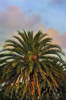 Golden Hour Palm by Stacey Sather