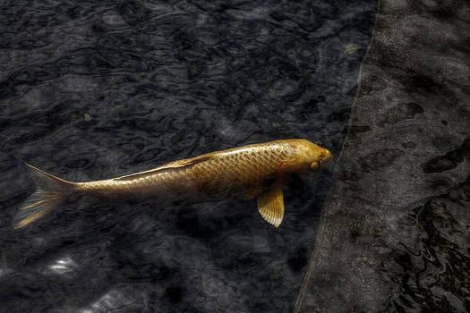 Golden Koi by Jeff  Jacobson